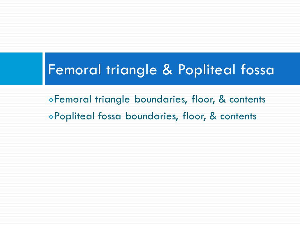  Femoral triangle boundaries, floor, & contents  Popliteal fossa boundaries, floor, & contents Femoral triangle & Popliteal fossa