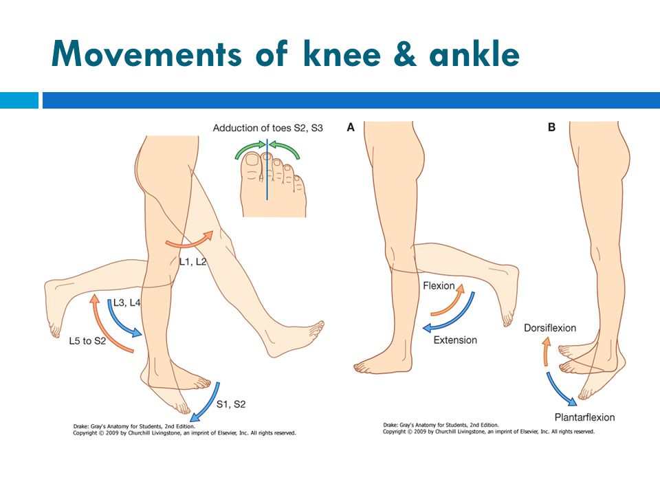 Movements of knee & ankle