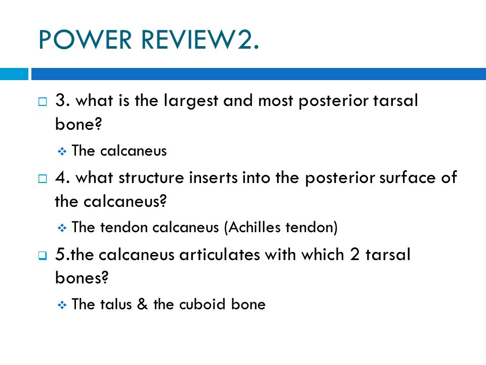 POWER REVIEW2.  3. what is the largest and most posterior tarsal bone?  The calcaneus  4. what structure inserts into the posterior surface of the