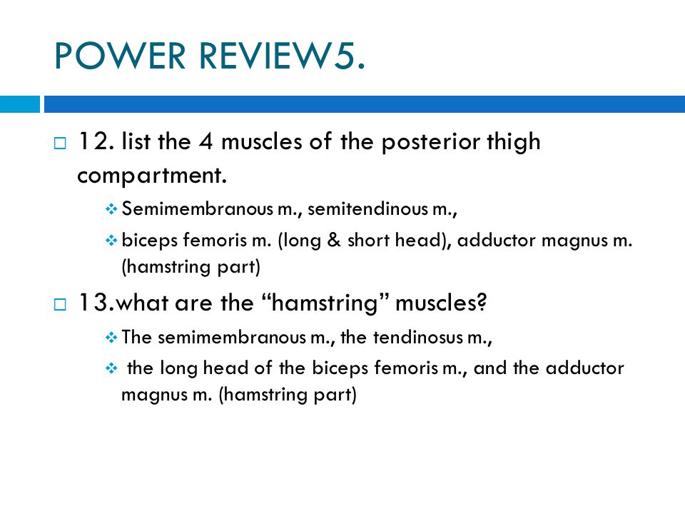 POWER REVIEW5.  12. list the 4 muscles of the posterior thigh compartment.  Semimembranous m., semitendinous m.,  biceps femoris m. (long & short h