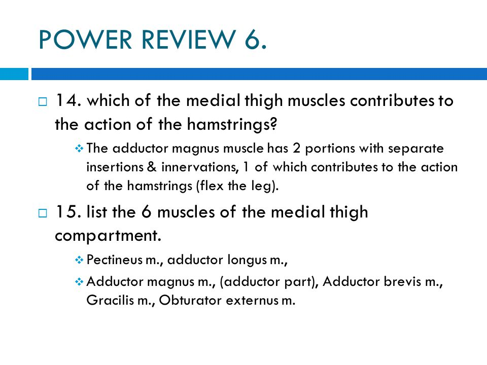 POWER REVIEW 6.  14. which of the medial thigh muscles contributes to the action of the hamstrings?  The adductor magnus muscle has 2 portions with