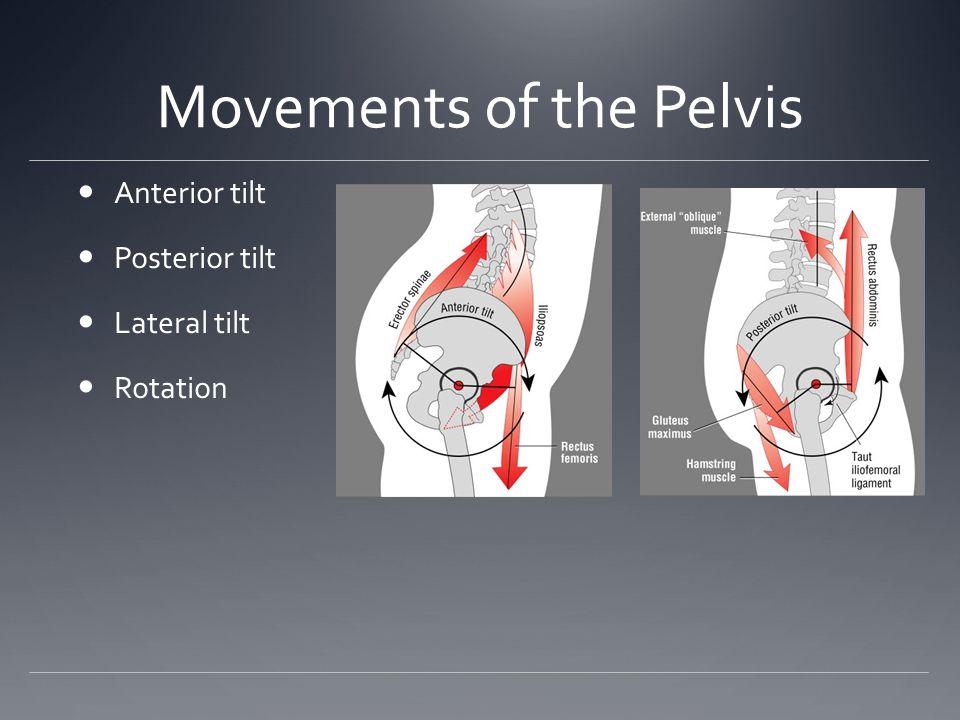 Movements of the Pelvis Anterior tilt Posterior tilt Lateral tilt Rotation