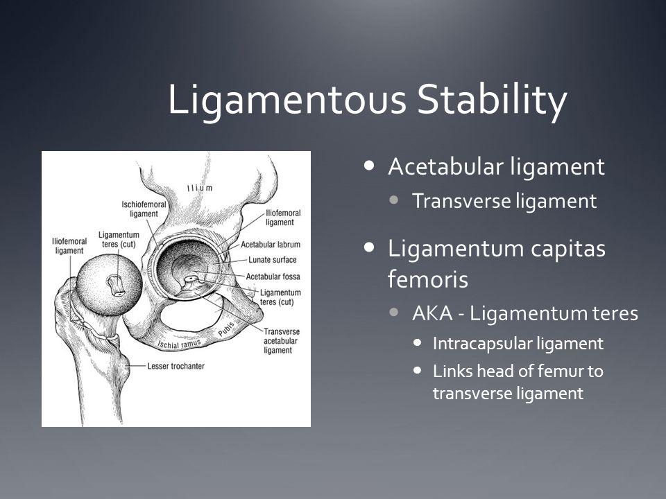 Ligamentous Stability Acetabular ligament Transverse ligament Ligamentum capitas femoris AKA - Ligamentum teres Intracapsular ligament Links head of f