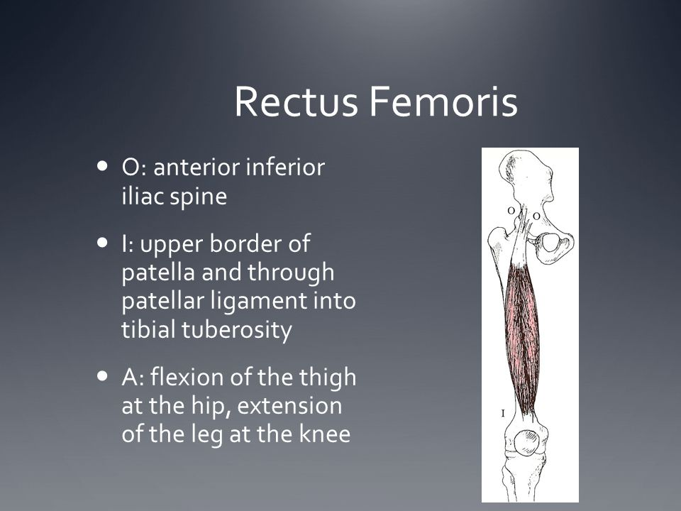 Rectus Femoris O: anterior inferior iliac spine I: upper border of patella and through patellar ligament into tibial tuberosity A: flexion of the thig