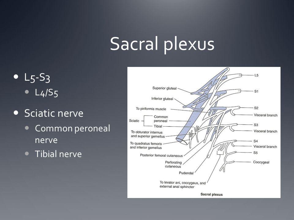 Sacral plexus L5-S3 L4/S5 Sciatic nerve Common peroneal nerve Tibial nerve