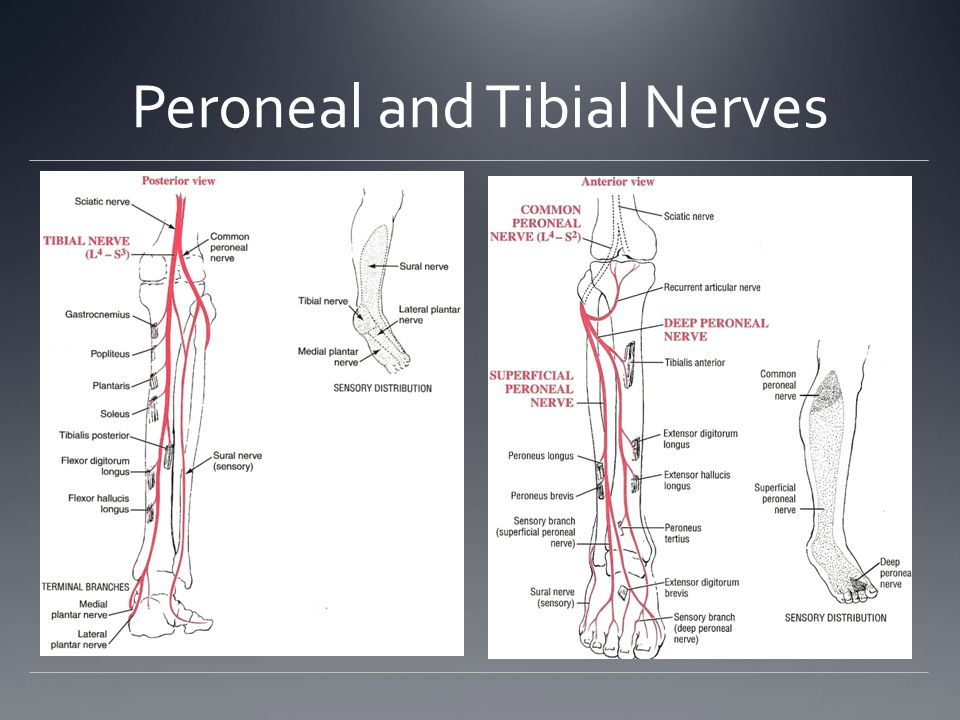 Pelvic Girdle Pelvis is a segmental bridge between the vertebral column and the lower extremity Articulations of Pelvic Girdle Sacroiliac joint Iliac and sacrum Pubic symphysis