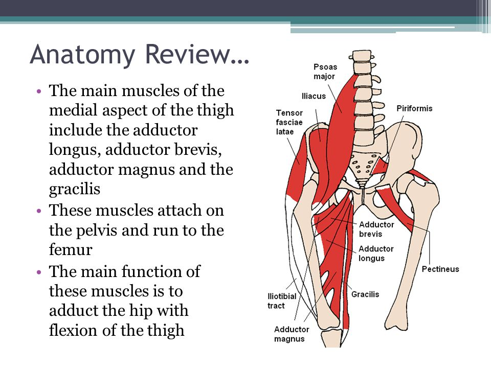 Anatomy Review… The third group of muscles in the thigh are in the posterior aspect of the thigh and are commonly known as the hamstrings These include the semitendinosus, semimembranosus, and biceps femoris All these muscles attach on the pelvis and run down the leg to the tibia The main function of this group of muscles is to flex the leg at the knee