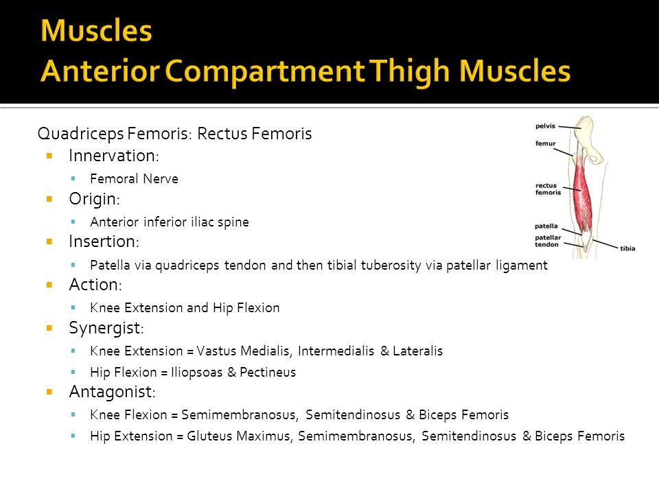 Quadriceps Femoris: Rectus Femoris  Innervation:  Femoral Nerve  Origin:  Anterior inferior iliac spine  Insertion:  Patella via quadriceps tend