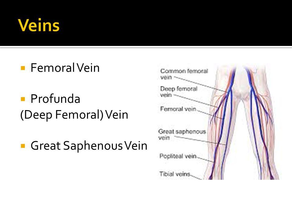  Femoral Vein  Profunda (Deep Femoral) Vein  Great Saphenous Vein