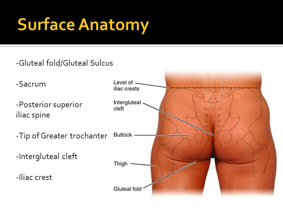 -Gluteal fold/Gluteal Sulcus -Sacrum -Posterior superior iliac spine -Tip of Greater trochanter -Intergluteal cleft -Iliac crest