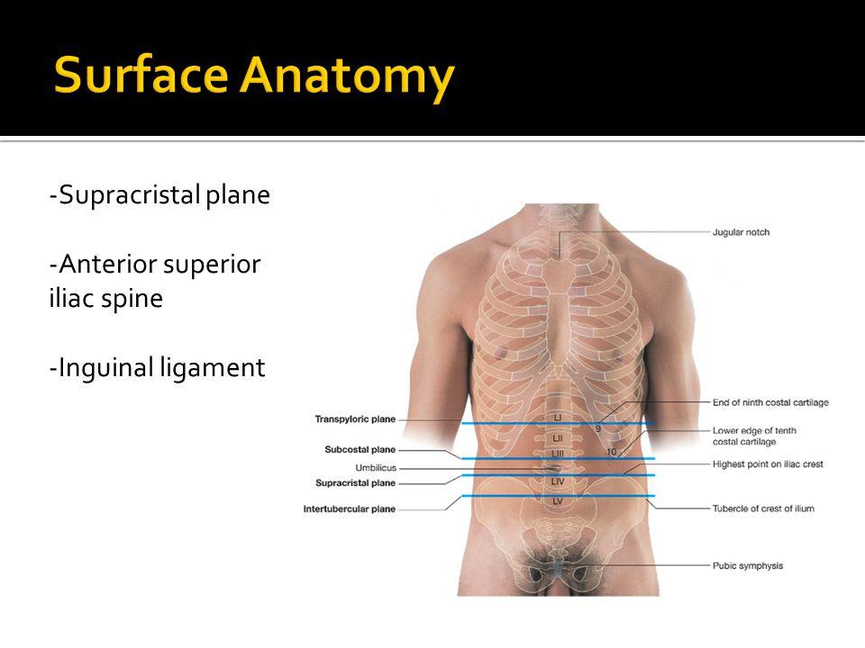 -Supracristal plane -Anterior superior iliac spine -Inguinal ligament