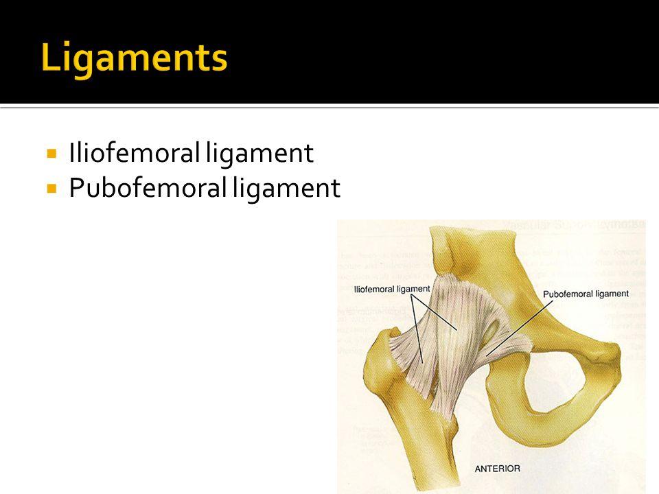  Iliofemoral ligament  Pubofemoral ligament
