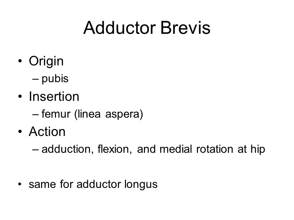 Adductor Brevis Origin –pubis Insertion –femur (linea aspera) Action –adduction, flexion, and medial rotation at hip same for adductor longus