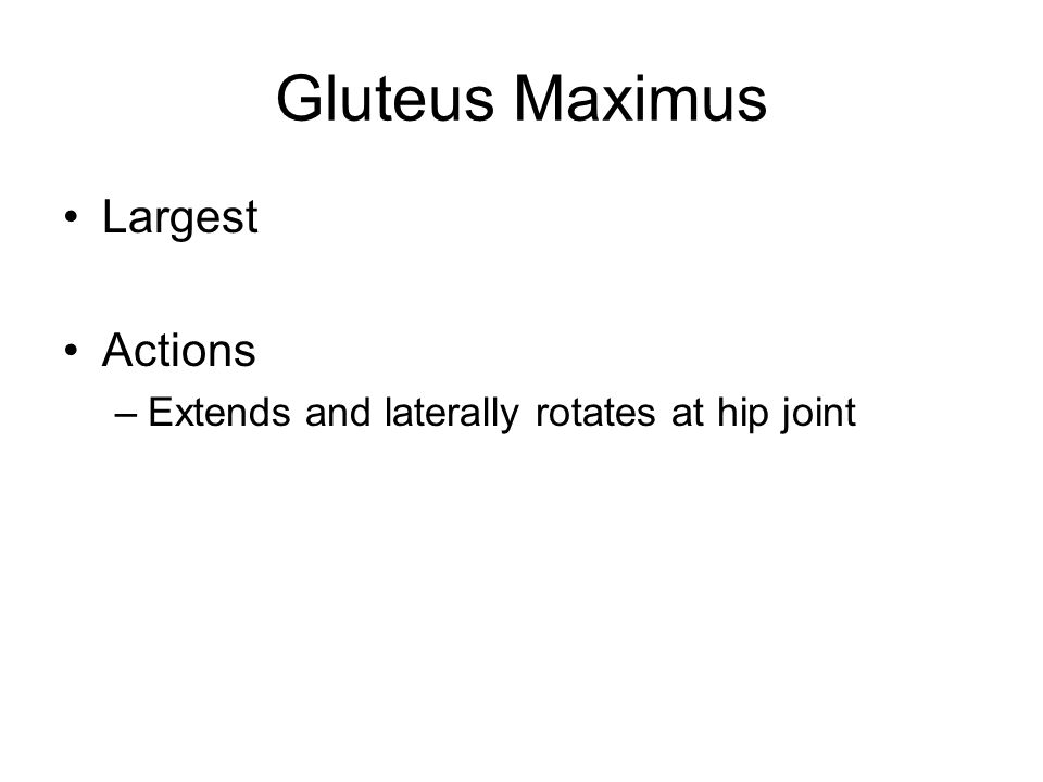 Gluteus Maximus Largest Actions –Extends and laterally rotates at hip joint