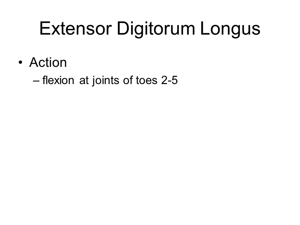 Extensor Digitorum Longus Action –flexion at joints of toes 2-5