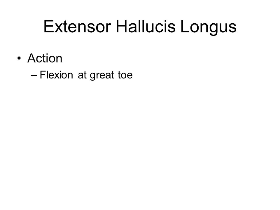 Extensor Hallucis Longus Action –Flexion at great toe