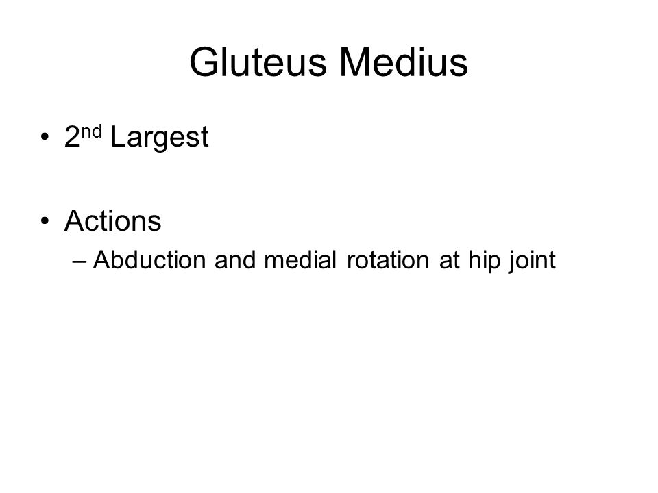 Gluteus Medius 2 nd Largest Actions –Abduction and medial rotation at hip joint