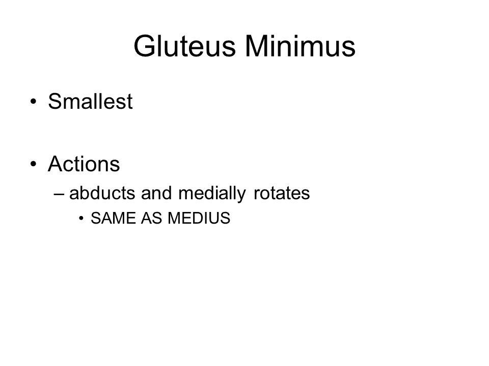 Vastus Medialis Origin –Femur Insertion –tibial tuberosity via patellar ligament Action –extension at knee joint part of quadriceps femoris muscle group of anterior thigh