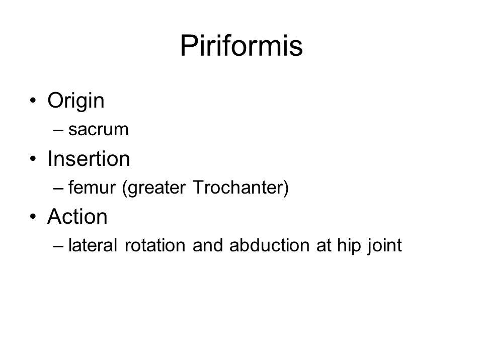 Sartorius Origin –Anterior superior iliac spine Insertion –tibia Action –flexion at knee –flexion and lateral rotation at hip