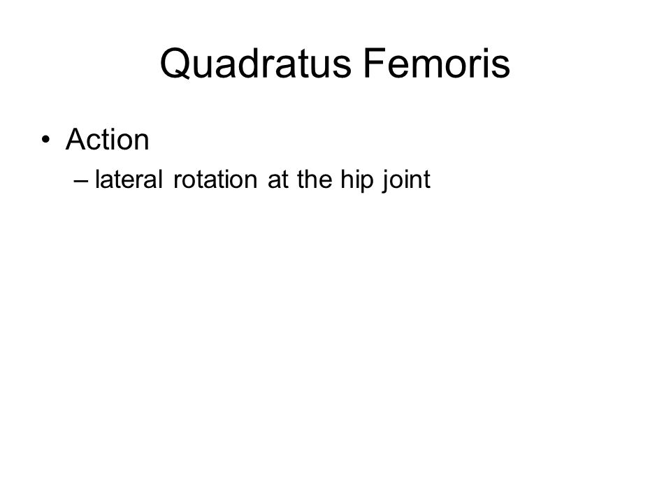 Adductor Magnus Origin –pubis & ischium Insertion –femur (linea aspera) Action –altogether: adduction at hip joint –superior portion: flexion and medial rotation at hip –inferior part: extension and lateral rotation at hip