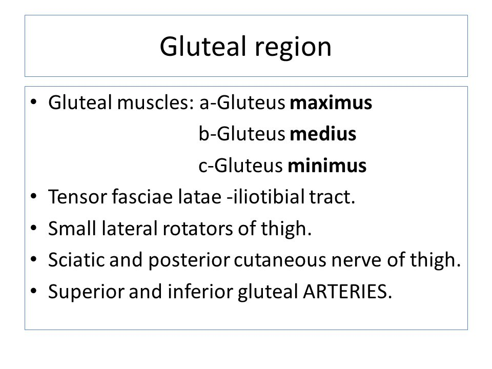 Gluteal region Gluteal muscles: a-Gluteus maximus b-Gluteus medius c-Gluteus minimus Tensor fasciae latae -iliotibial tract. Small lateral rotators of
