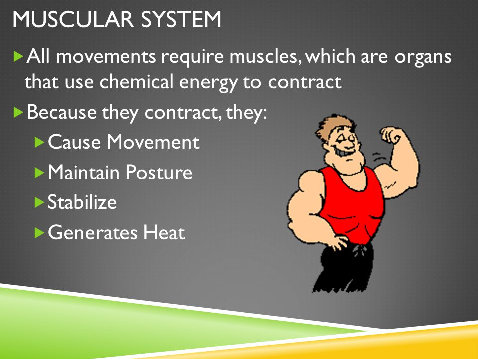  All movements require muscles, which are organs that use chemical energy to contract  Because they contract, they:  Cause Movement  Maintain Posture  Stabilize  Generates Heat