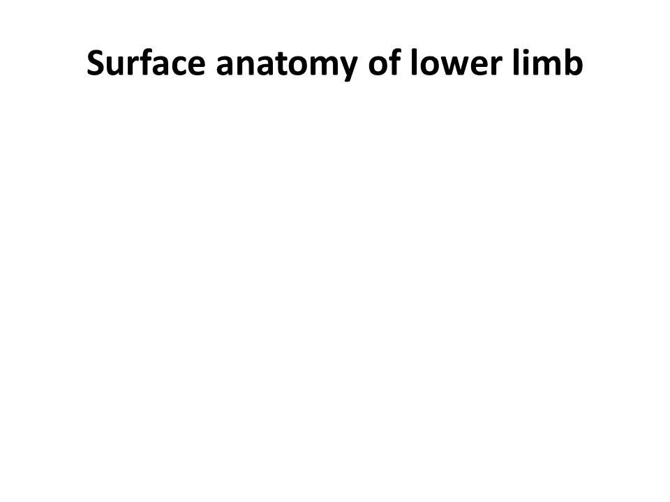 Surface anatomy of lower limb