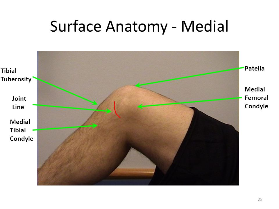 25 Surface Anatomy - Medial Medial Femoral Condyle Patella Joint Line Medial Tibial Condyle Tibial Tuberosity