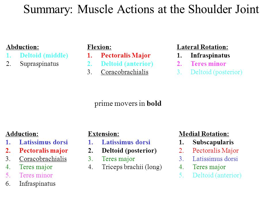 Summary: Muscle Actions at the Shoulder Joint Abduction: 1.Deltoid (middle) 2.Supraspinatus Adduction: 1.Latissimus dorsi 2.Pectoralis major 3.Coracob