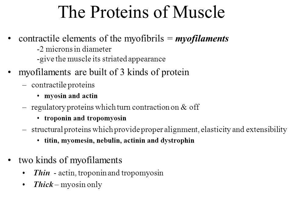 myosin/thick filament only region = H zone thin filament only region = I band length of myosin/thick filaments = A band contraction = sliding filament theory thick and thin myofilaments slide over each other and sarcomere shortens Sarcomere Structure M line