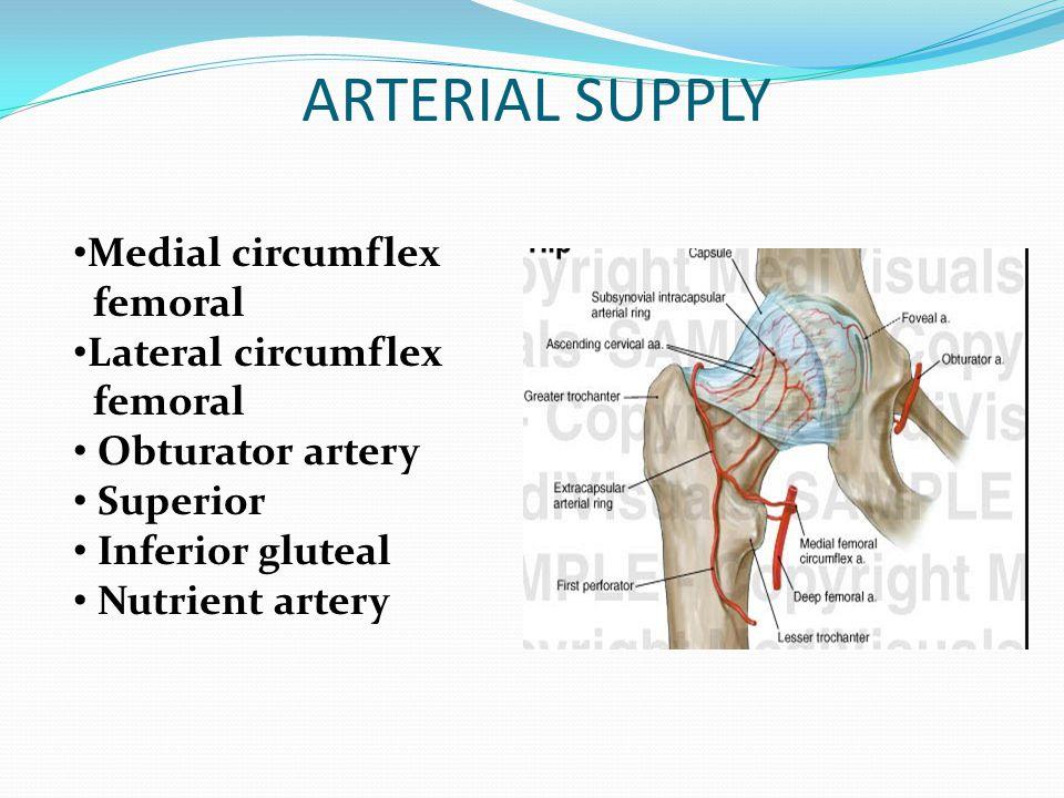 ARTERIAL SUPPLY Medial circumflex femoral Lateral circumflex femoral Obturator artery Superior Inferior gluteal Nutrient artery