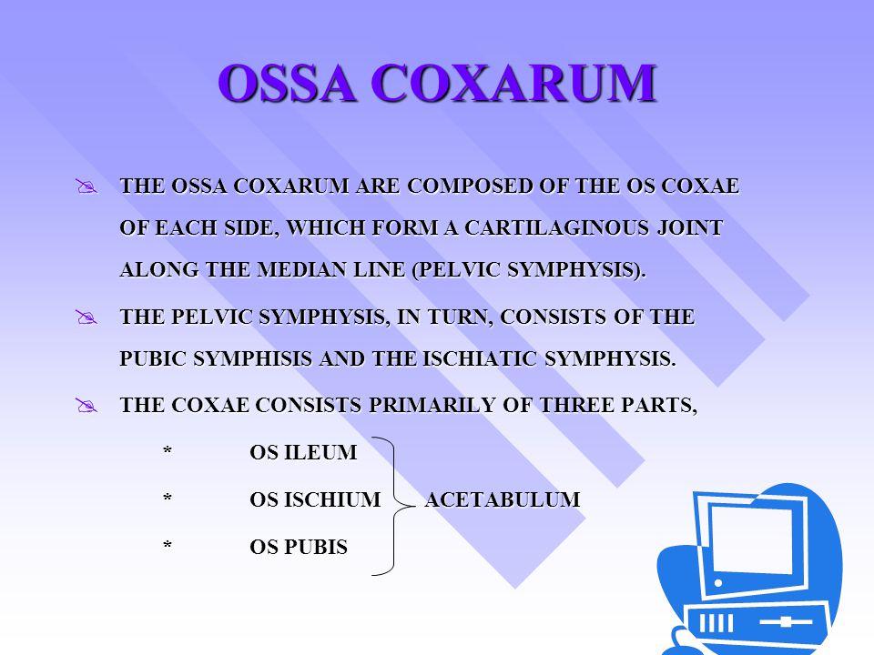 OSSA TARSUS ANIMAL∑TALUS CALCA NEUS CENTRALEIVIIIIII HORSE6+++++ - FUSI - COW RUMINA NSIA 5++ - FUSI - + PIG7+++++++ DOG7+++++++