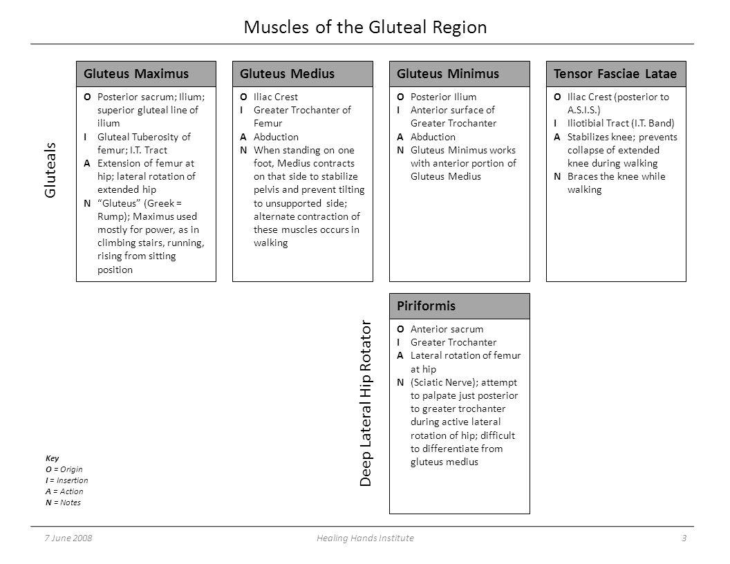 Muscles of the Gluteal Region 7 June 20083Healing Hands Institute OPosterior sacrum; Ilium; superior gluteal line of ilium IGluteal Tuberosity of femur; I.T.