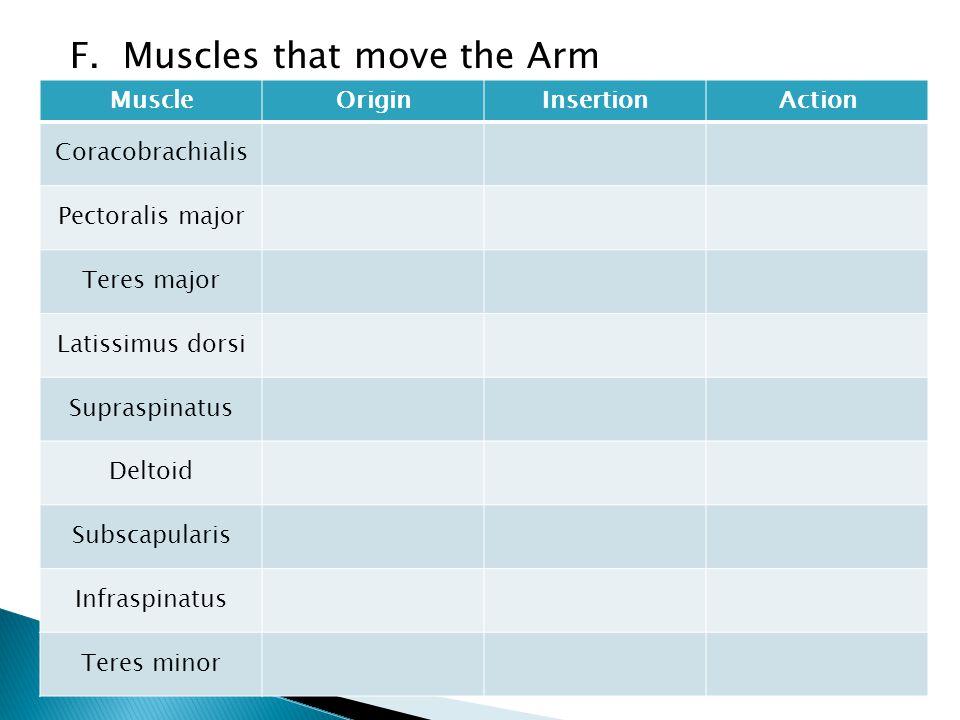 F. Muscles that move the Arm MuscleOriginInsertionAction Coracobrachialis Pectoralis major Teres major Latissimus dorsi Supraspinatus Deltoid Subscapu