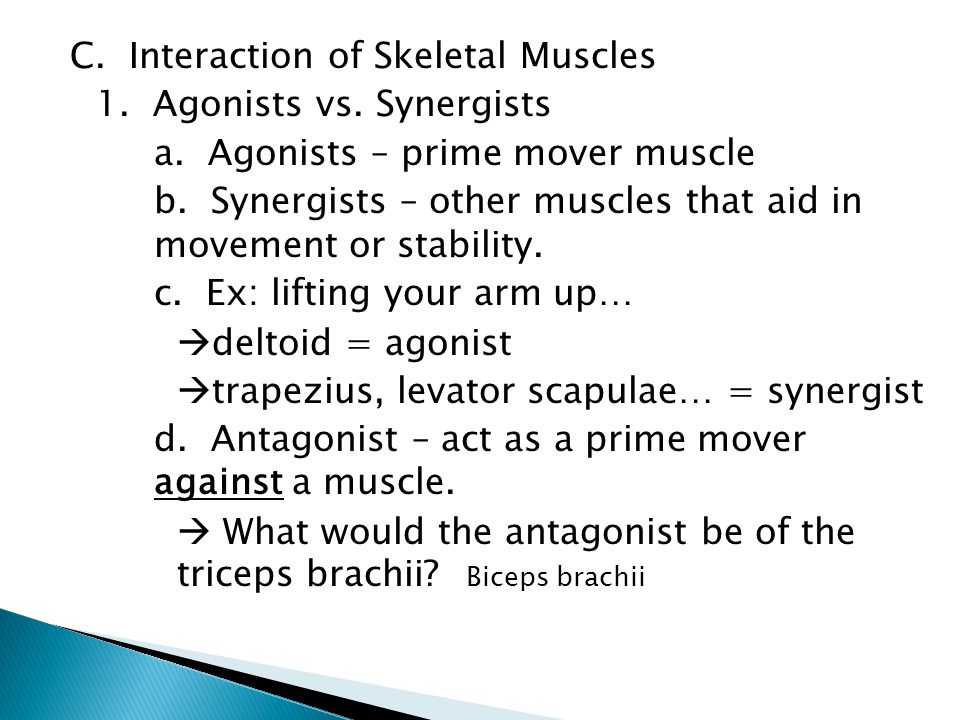 C. Interaction of Skeletal Muscles 1. Agonists vs.