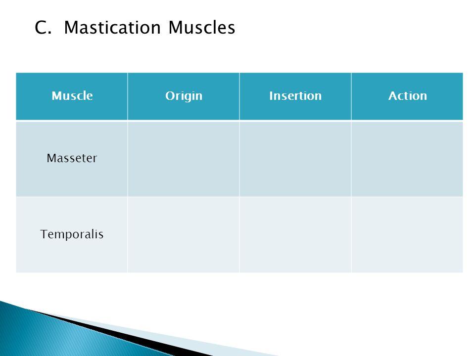 C. Mastication Muscles MuscleOriginInsertionAction Masseter Temporalis
