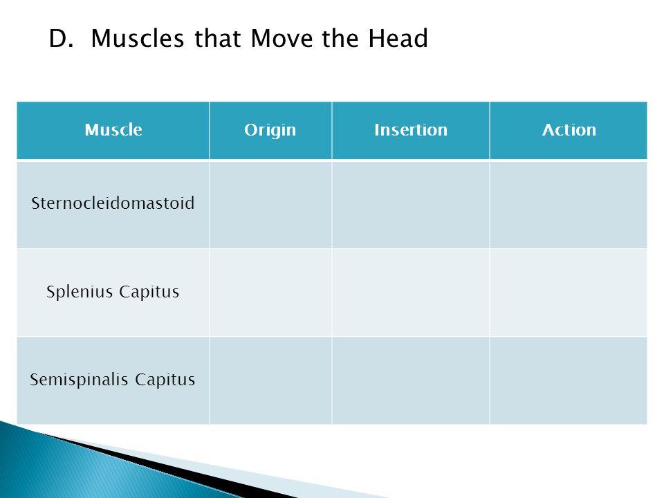 D. Muscles that Move the Head MuscleOriginInsertionAction Sternocleidomastoid Splenius Capitus Semispinalis Capitus