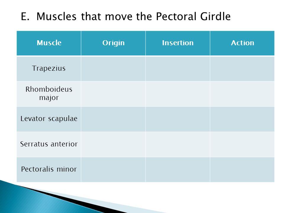 E. Muscles that move the Pectoral Girdle MuscleOriginInsertionAction Trapezius Rhomboideus major Levator scapulae Serratus anterior Pectoralis minor