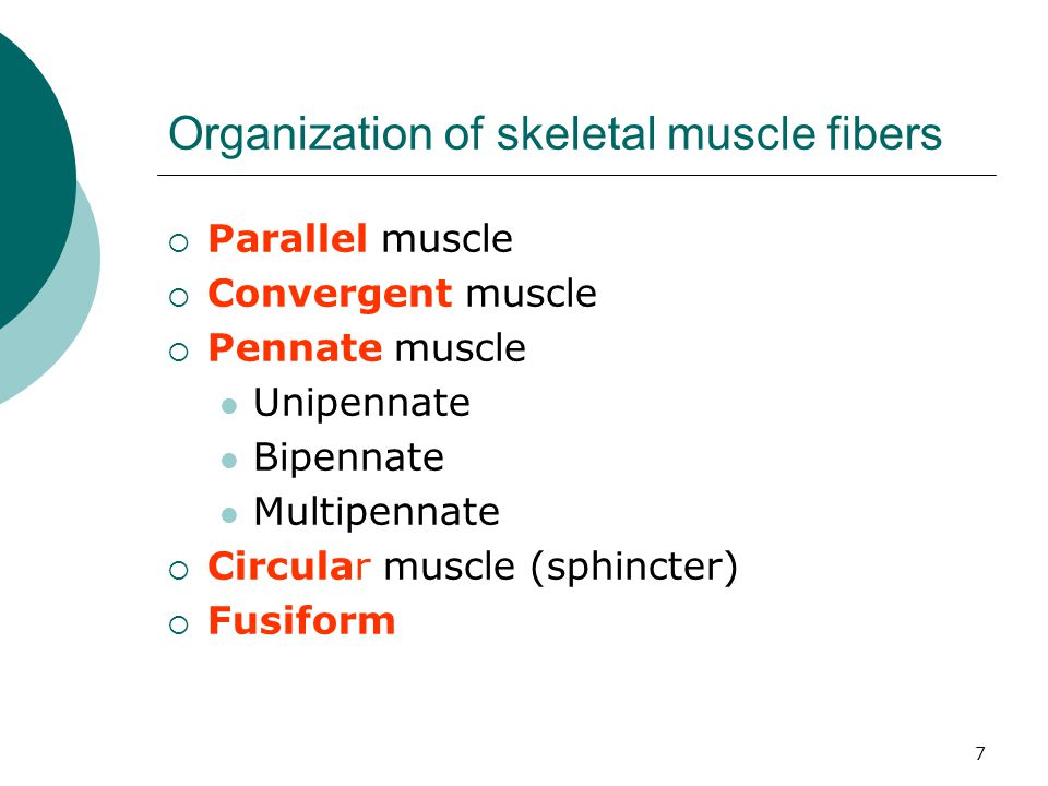 Muscles of Mastication 18