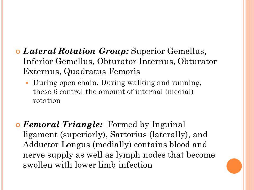 Lateral Rotation Group: Superior Gemellus, Inferior Gemellus, Obturator Internus, Obturator Externus, Quadratus Femoris During open chain. During walk