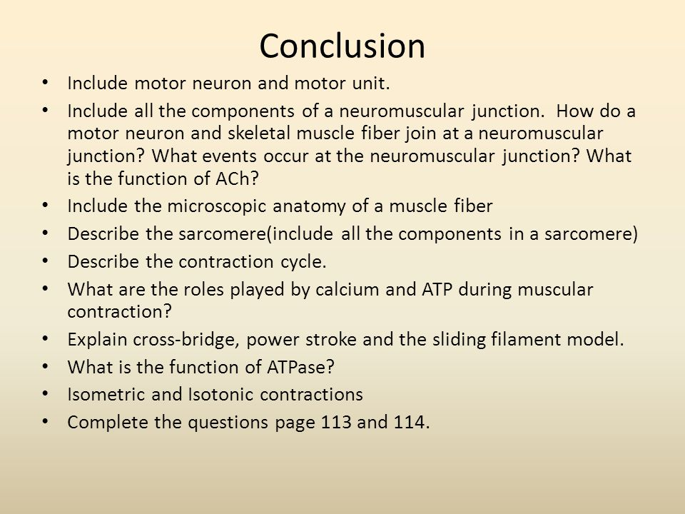 Conclusion Include motor neuron and motor unit. Include all the components of a neuromuscular junction. How do a motor neuron and skeletal muscle fibe