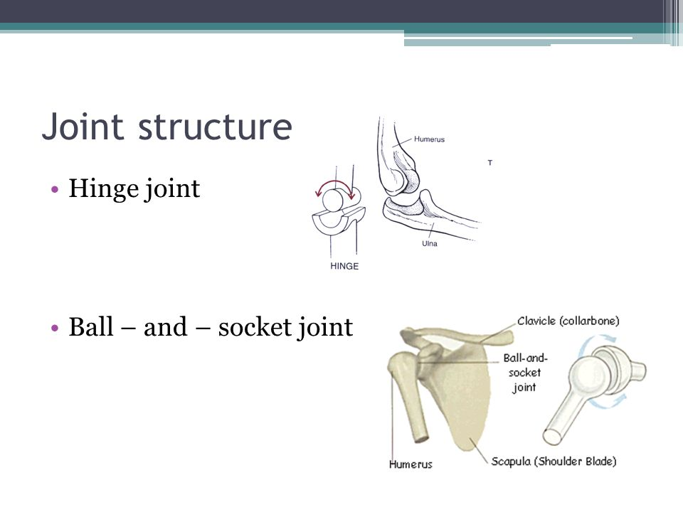 Joint structure Hinge joint Ball – and – socket joint