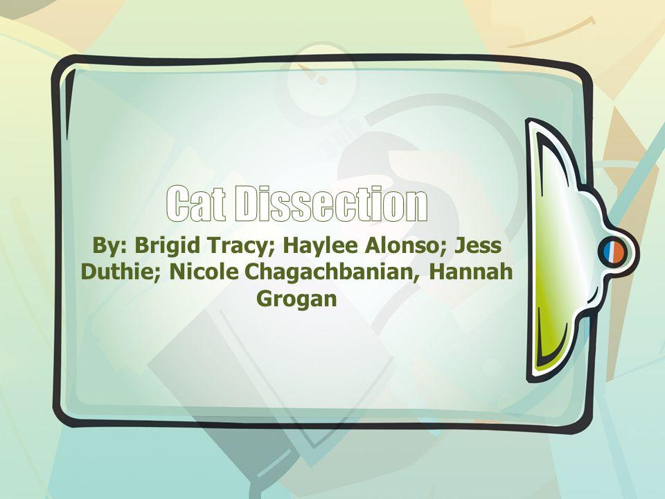 By: Brigid Tracy; Haylee Alonso; Jess Duthie; Nicole Chagachbanian, Hannah Grogan