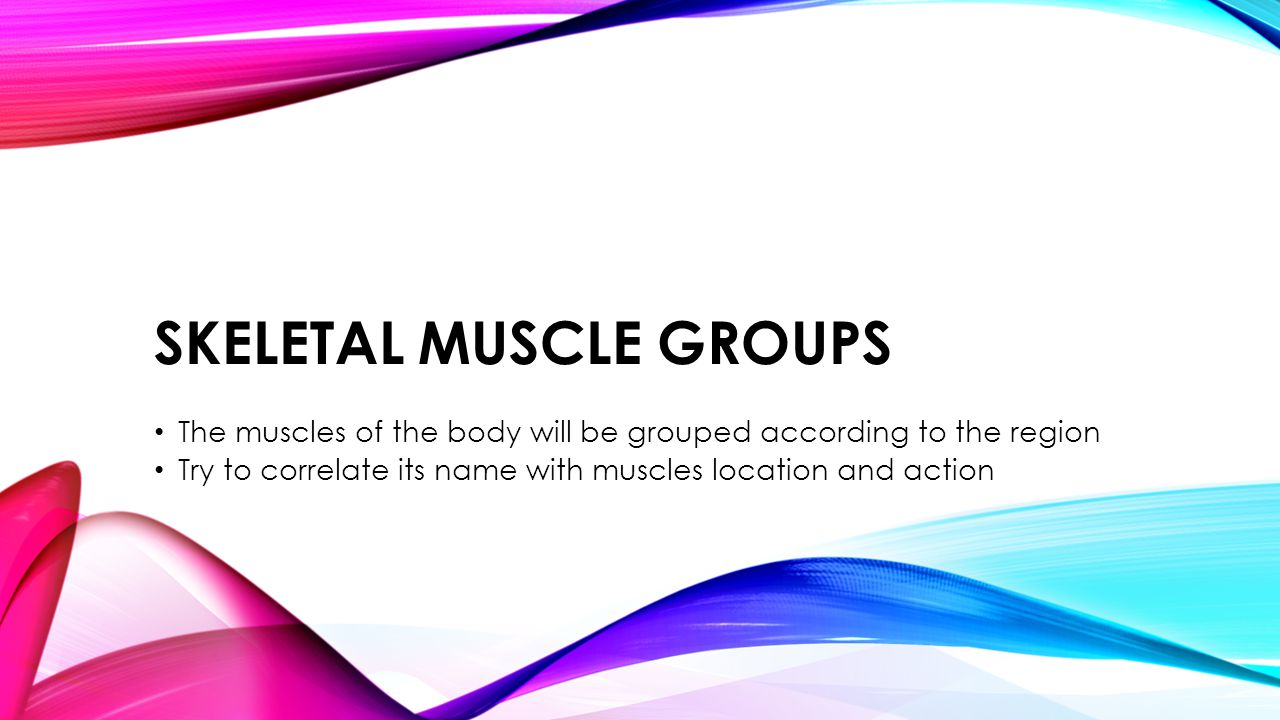 SKELETAL MUSCLE GROUPS The muscles of the body will be grouped according to the region Try to correlate its name with muscles location and action