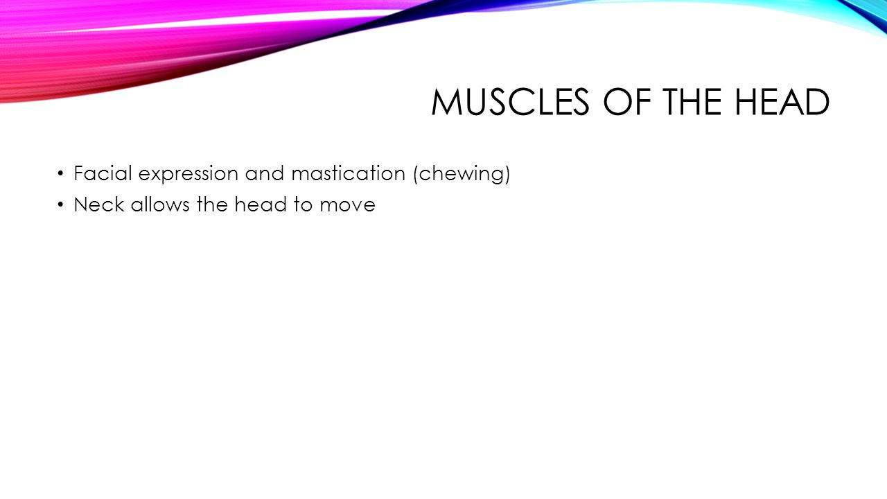 MUSCLES OF THE HEAD Facial expression and mastication (chewing) Neck allows the head to move