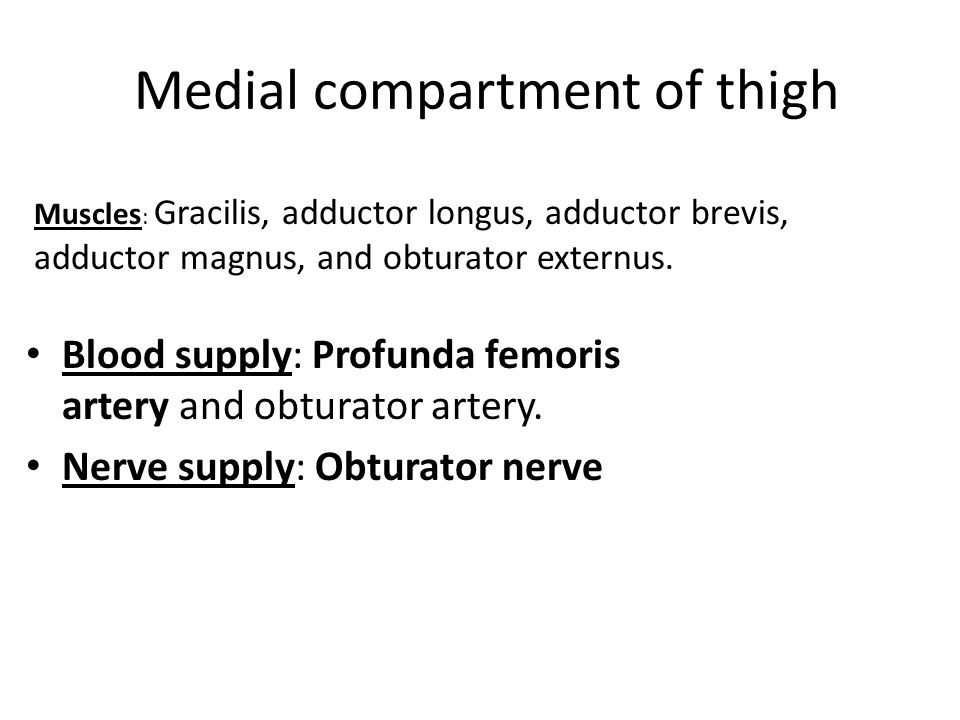 Medial compartment of thigh Blood supply: Profunda femoris artery and obturator artery.