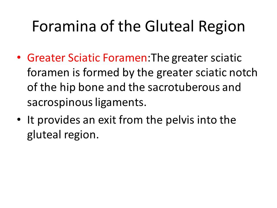 Foramina of the Gluteal Region Greater Sciatic Foramen:The greater sciatic foramen is formed by the greater sciatic notch of the hip bone and the sacrotuberous and sacrospinous ligaments.