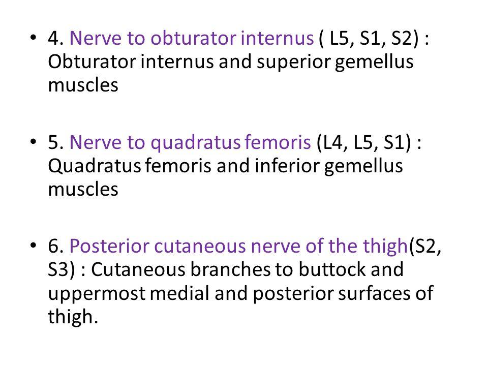 4.Nerve to obturator internus ( L5, S1, S2) : Obturator internus and superior gemellus muscles 5.