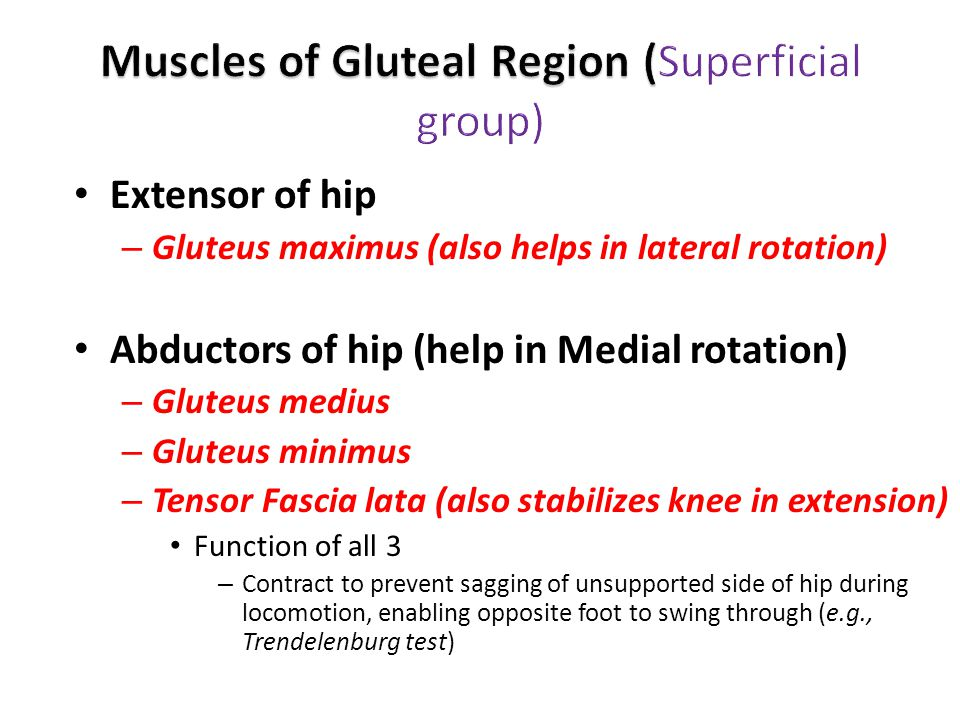 Extensor of hip – Gluteus maximus (also helps in lateral rotation) Abductors of hip (help in Medial rotation) – Gluteus medius – Gluteus minimus – Tensor Fascia lata (also stabilizes knee in extension) Function of all 3 – Contract to prevent sagging of unsupported side of hip during locomotion, enabling opposite foot to swing through (e.g., Trendelenburg test)