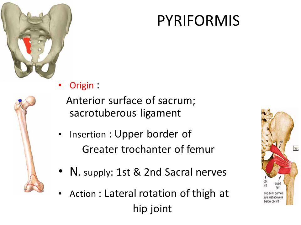 PYRIFORMIS Origin : Anterior surface of sacrum; sacrotuberous ligament Insertion : Upper border of Greater trochanter of femur N.